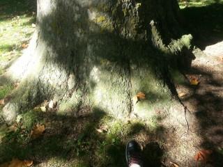 Pruebas con instrumental para diagnosticar el estado fitosanitario del árbol.