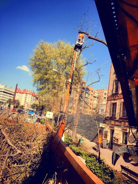 Poda arbolado urbano Madrid (distrito Arganzuela)