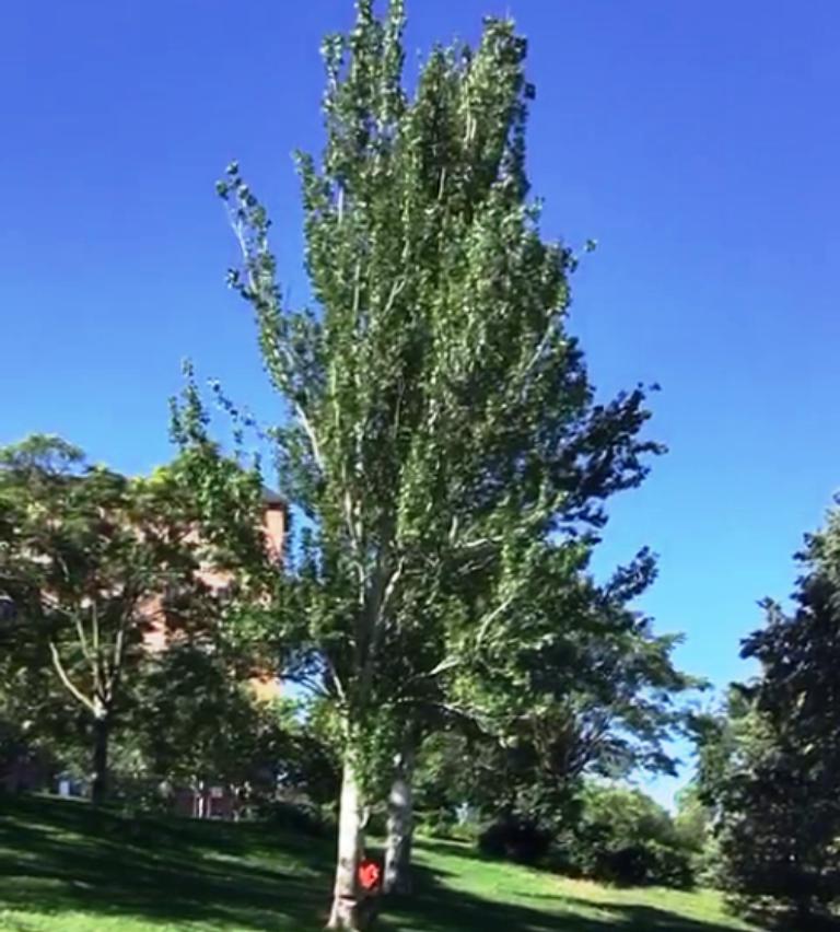 Tala de árbolado urbano en un parque de Madrid