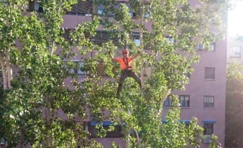 Poda arbolado con técnica de trepa en comunidad de propietarios de Madrid